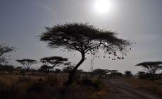 Samburu NP