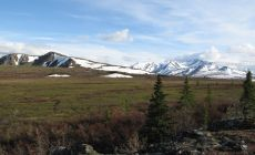Flat Top Mountain u NP Denali