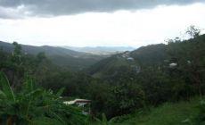 Příroda na Martiniku