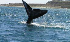 Pozorování velryb Patagonie