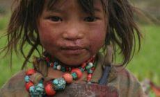 Tibetská hočička