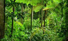 Tropický deštný prales v okolí Cairns