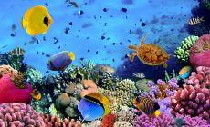 Korálová zahrada na Fiji