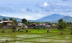 Rýžová farma v Laosu