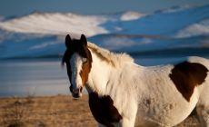 Kůň na břehu Bajkalu